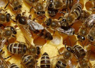 Api emilia romagna bando apicoltura