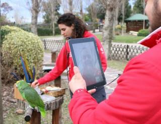 Zoomarine  pappagallo  skype
