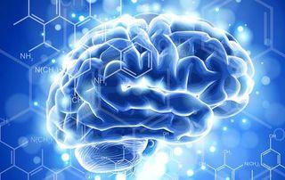 Cervello 1