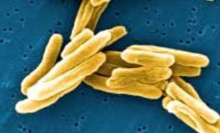 TUBERCOLOSI  san raffaele  ricerca  antibiotici  resistenza  mutazioni  tbc