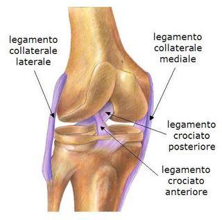 Legamenti del ginocchio