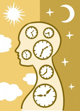 Daily Rhythms  clocks  jat lag   health problems  surgery