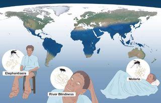 Nobel prize medicine malaria Karolinska
