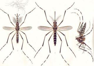 Zika 3