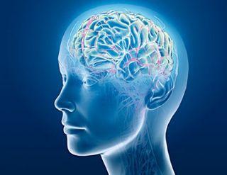 Cervello 6