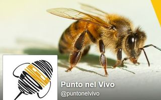 Punto nel vivo api vespe federasma allergia puntura