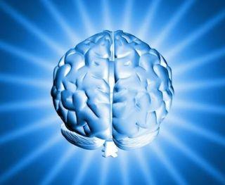 Cervello 5