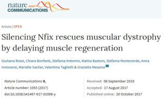 Distrofia  Nfix  staminali  nature  movimento  neuroni  muscoli  respirazione  locomozione  milano