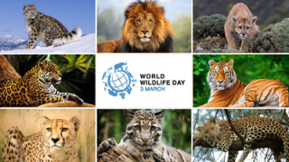 World Wildlife Day  svizzera  felini  leone  tigri