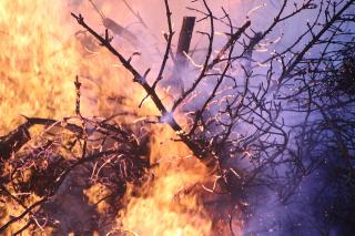 Incendi  cnr  barcellona  nature