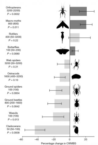 Cnr  ragni  invertebrati  clima  insetti  taglia  grandezza  studio