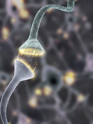 Neuroni sinapsi trasmissione