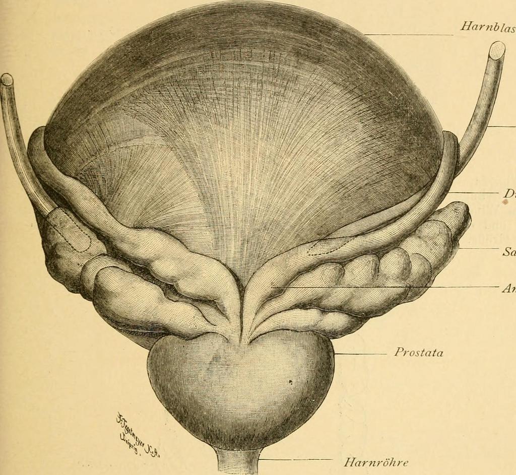 pdta tumore prostata puglia map