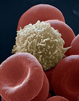 Foto globuli rossi e globuli bianchi