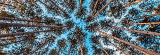 Meristemi  piante  crescita  transizione  sapienza  Di Mambro