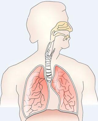 Polmoni uomo