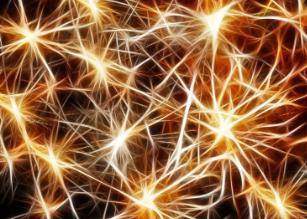 Gambini  cervello  isteria  neuroni  priori  università milano  cervello