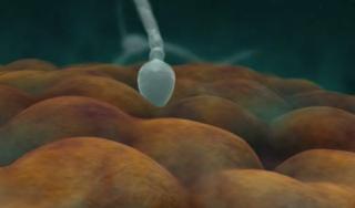 Ovulo fecondazione 2