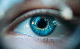 Collirio  glaucoma  cordone ombelicale  universita  bologna  vista  cecita  occhio campos  velati  bzzi  ercb  brevetto