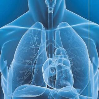 Cuore polmoni