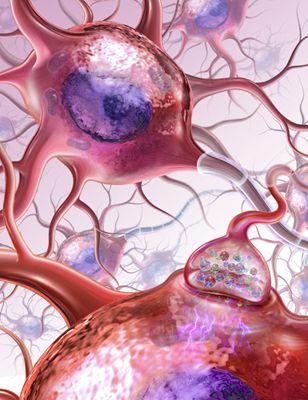 Neuroni copia