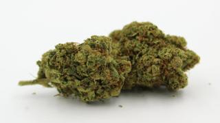 Coldiretti  legge  salvini  cannabis  negozi  chiusura  regioni