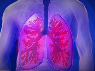 Foto polmone bella