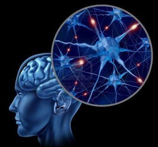 Cerebro-humano-r
