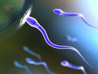 Spermatozoi fecondazione ovulo