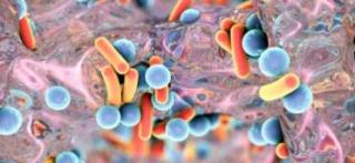 Ciprofloxacina  efsa  ecdc  salmonella  infezione  macrolidi  fluorochinoloni  farmaci  resistenza  antibiotici