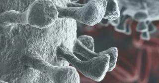 Coronavirus  spikes  polmoni  recettori  contagio  covid-19  vaccino