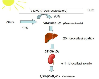 Vitamina d  sole  ipovitaminosi  vitamina  carenza  coronavirus  covid-19  British Dietetic Association  isaia  torino