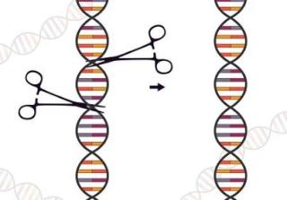 CRISPR-Cas9  LOCATELLI  bambino gesu'  staminali  ash  ricerca  sperimentazione  NewEnglandJournal of Medicine  anemia falciforme  editing  VertexPharmaceuticals  CrisprTherapeutics