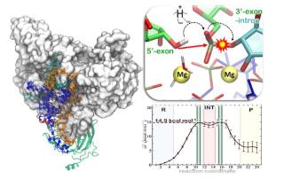Taglia  cuci  cnr  immunoglobuline  ricerca