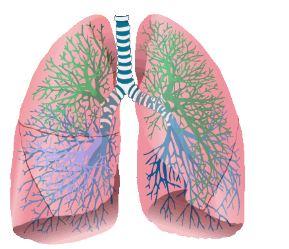 Foto box polmone
