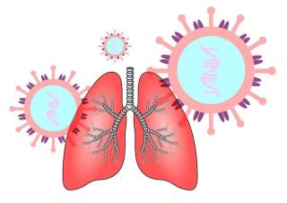 Polmoni  virus  coronavirus  infezione  tosse  goccioline  contagio