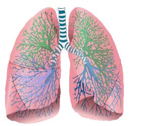 Foto  polmone
