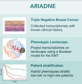 Tumore  cancro  seno  statale  milano  ariadne  algoritmi  cell system  la porta  biopsia