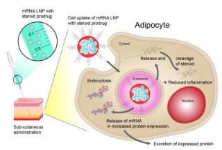 Astrazeneca  vaccino  pfizer  farmaci  mrna  Jülich Center for Neutron Science  nanoparticelle lipidiche  lnp  infarto  ictus  ricerca  infiammazione
