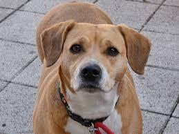 Olfatto  sudore  cani  covid  coronavirus  test  studio  milano  gasparri  screening  sintomatici  composti volativi  VOCs  canco  biomarcatori  spaggiari  leonessi  addestramento  tamponi