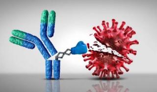 Scaglione  fauci  anticorpi  durata  calo  mesi  vaccino  vaccinazione  niguarda  ricerca  terza dose  cdc